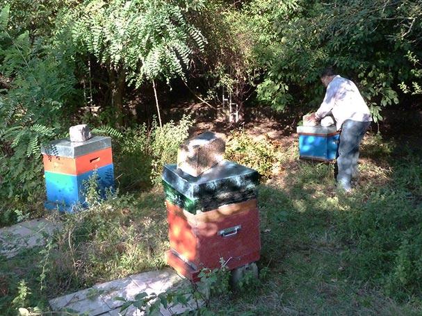Chanteraines ruches